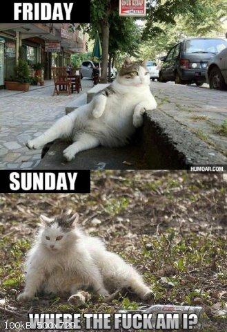 friday-sunday-cat.jpg.jpg - 100kB