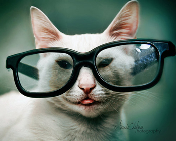 prillid.jpg - 80kB